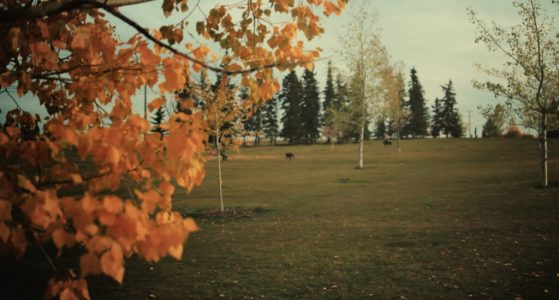 Dog-park-Calgary-plintz-real-estate-realtor-marda-loop-altadore