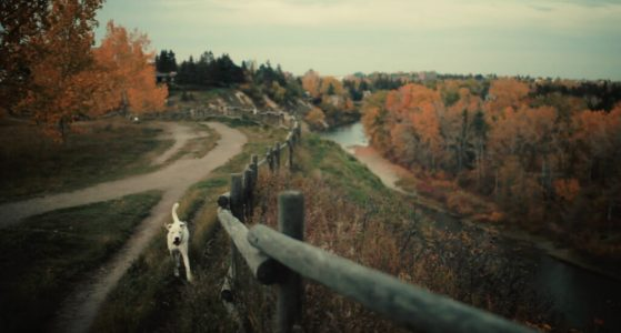 Dog-park-trails-river-Calgary-plintz-real-estate-realtor-marda-loop-altadore